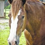 Officials urge vaccination of horses after discovery of early case of deadly encephalitis