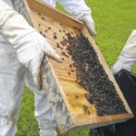 South Carolina dodges bullet with Africanized bees